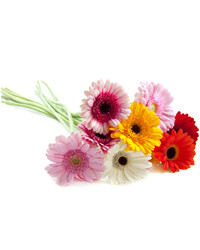Mixed Color Gerberas